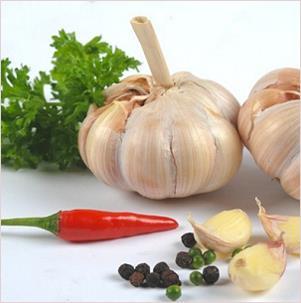 Garlic and its Health Benefits